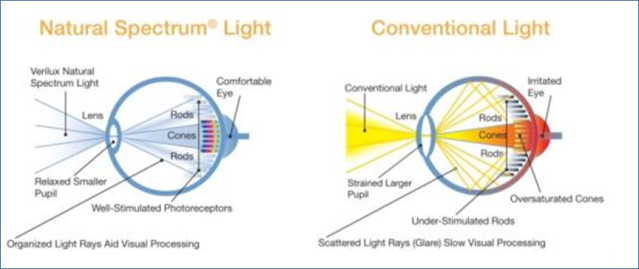 natural spectrum vs. conventional light